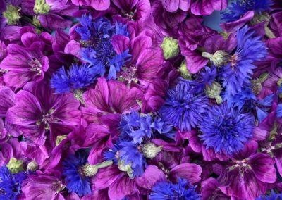 Mauve bleuets